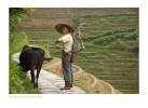 ChinaRice2905_9-18-07