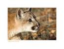 Cougar645_12-24-07