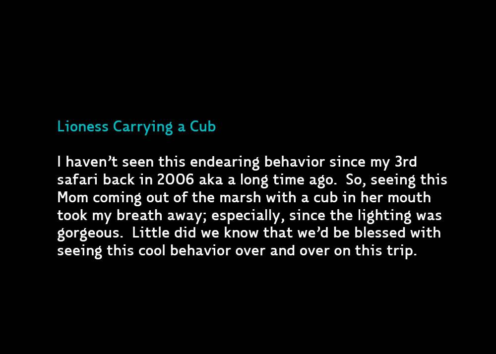 CubCarry-jan28-2020
