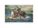 Cubs2075Overbear_Sept5-2010