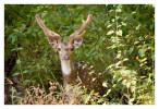 Deer90_Jan23-2012