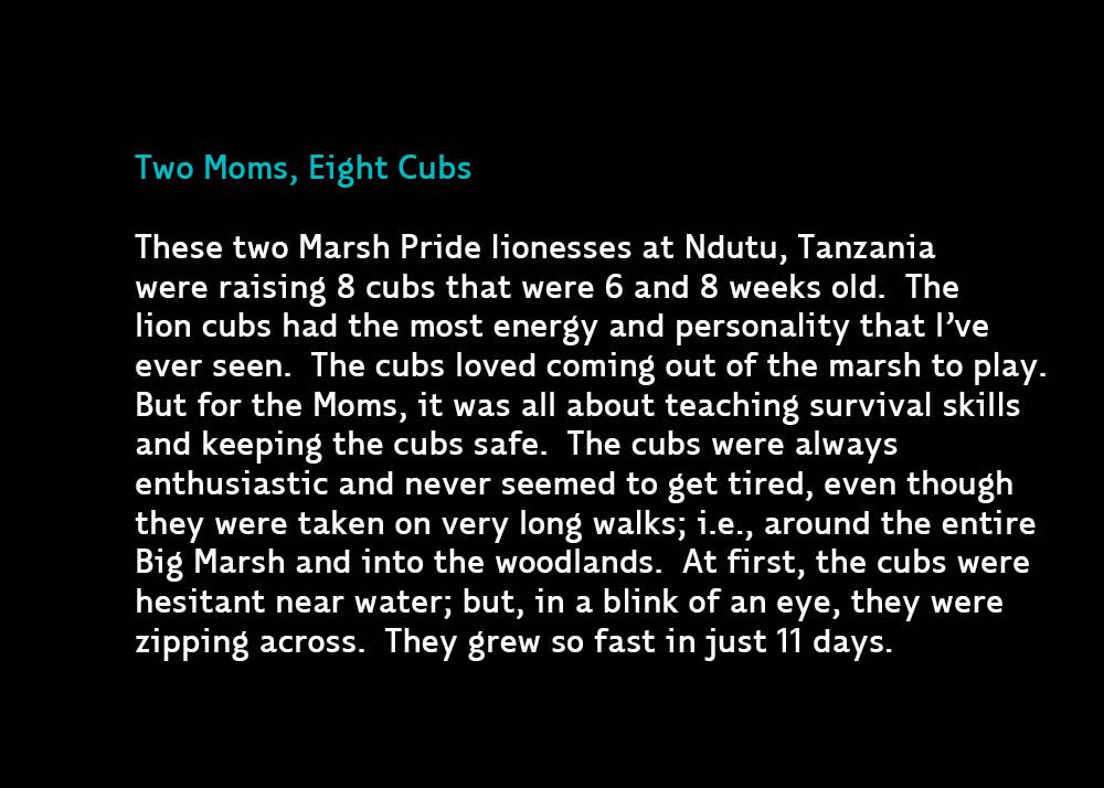 EightCubs-Jan28-2020