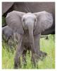 Elephant1369B_Apr21-2011