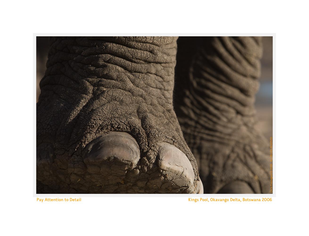 Wildlife Rhythms ™ Okavango Delta, Botswana November 2006