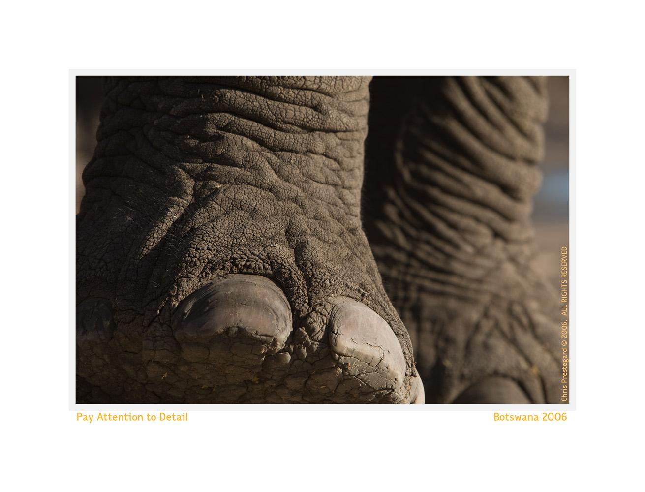 Elephant2535-Oct5-2013