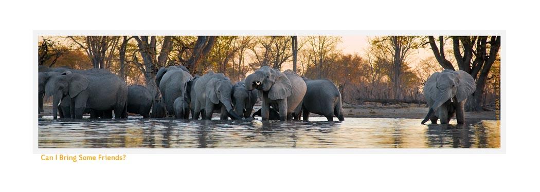 Elephant2717_1-5-08