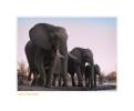 Elephant2736_1-5-08