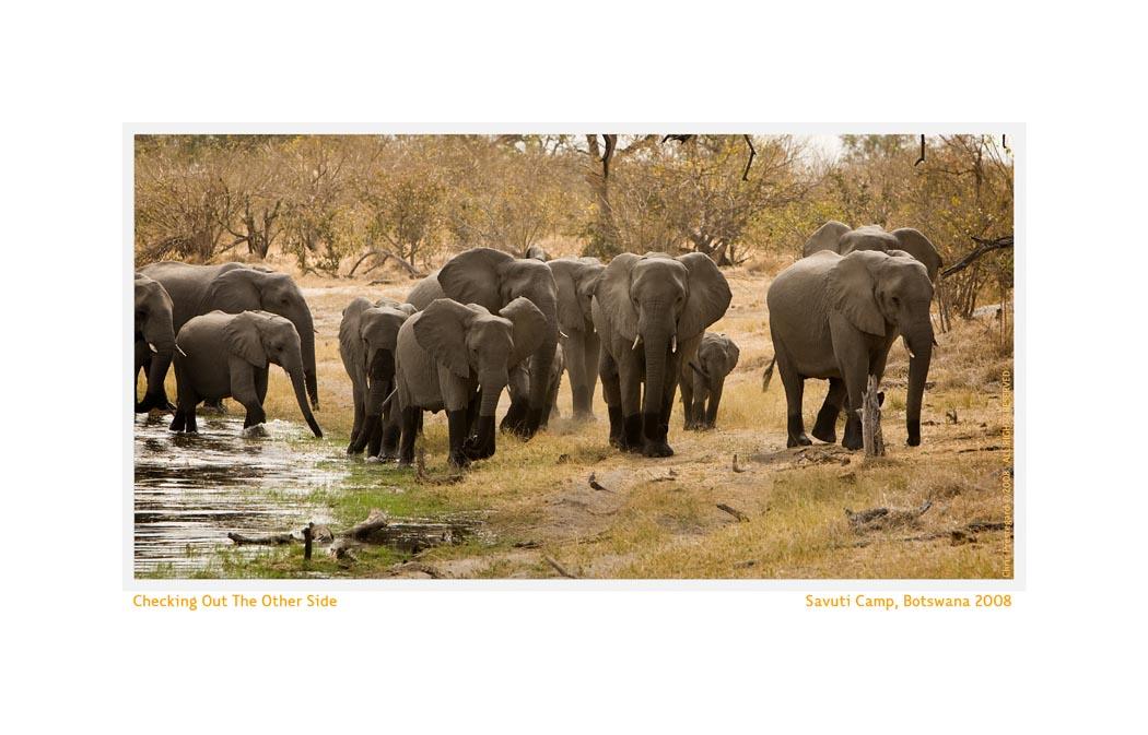 Elephant2799f_Aug22-08