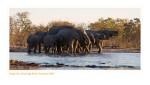 Elephant2951_9-14-07