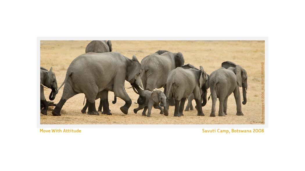 Elephant3133_Aug24-08
