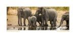 Elephant4502d_Aug23-08