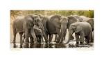 Elephant4507c_Aug23-08