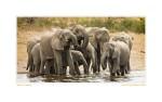 Elephant4513c_Aug22-08
