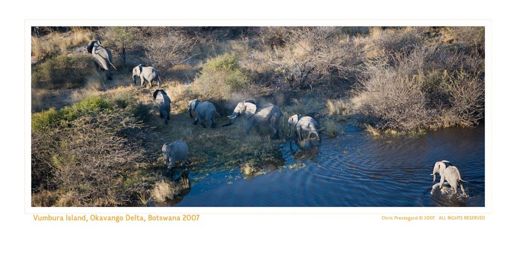 Elephant4600__9-19-07