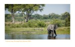 Elephant4816_9-15-07