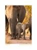 Elephant802Stroll_May25-09