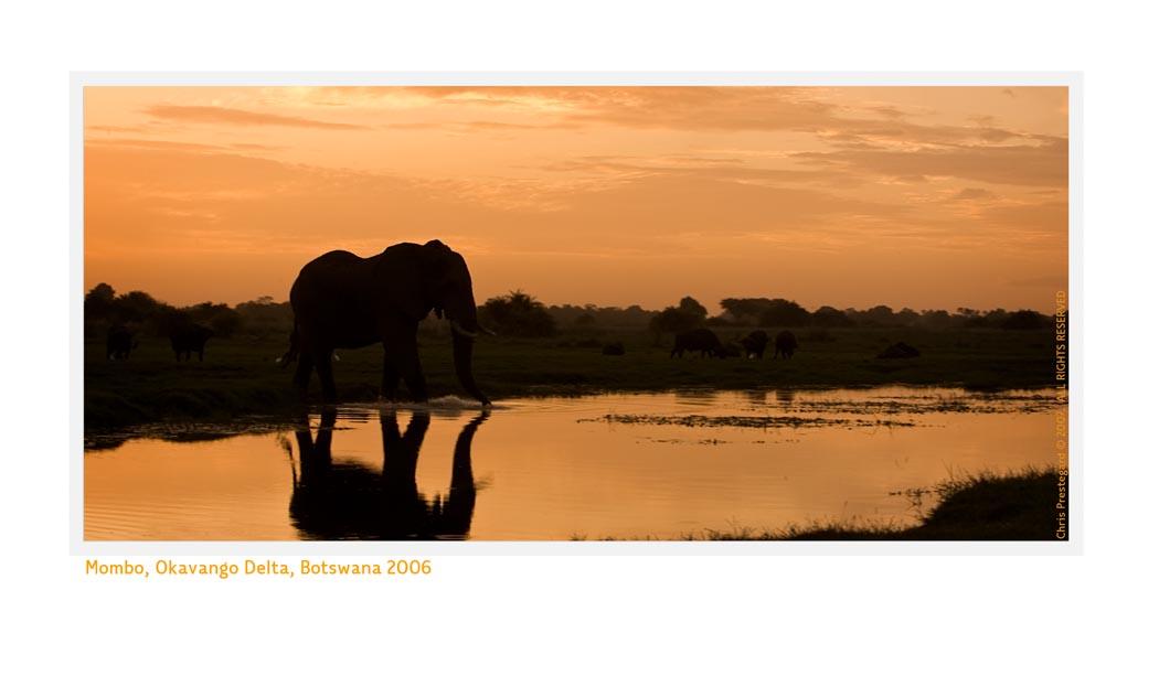Elephant803_1-17-08