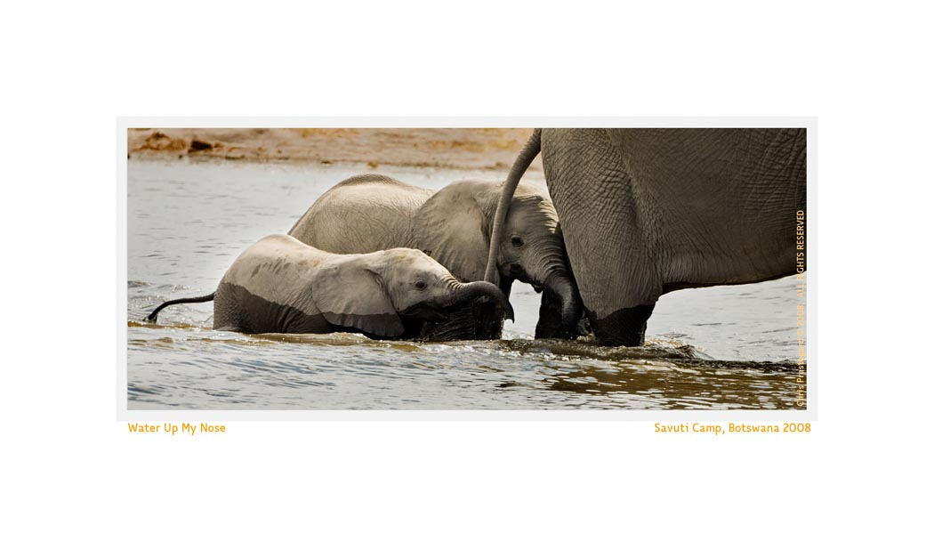 ElephantSavu4562c_Aug9-08