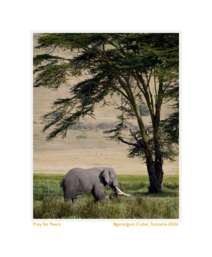 ElephantTree6483d_Feb15-09