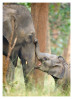 Elephants1674_Jan23-2012