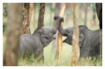 Elephants1715_Jan23-2012