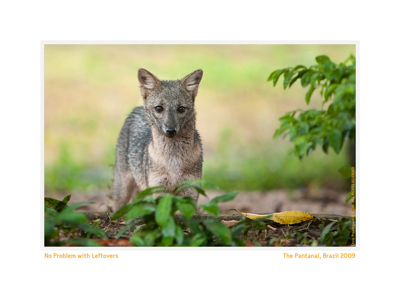 Fox5476_Aug20-09