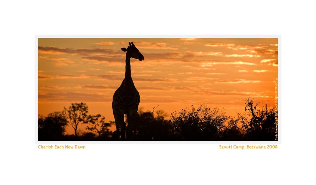 GiraffeSavu3076b_Aug27-08