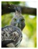Hawk2090_Jan23-2012