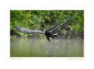Hawk4016_Aug22-09