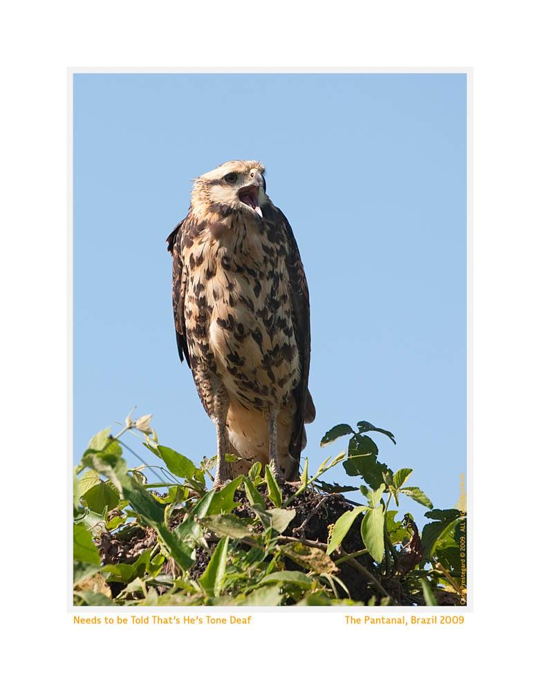 Hawk5328b_Aug22-09