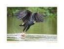 Hawk6666b_Aug20-09_2