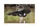 Hawk6683b_Aug25-09