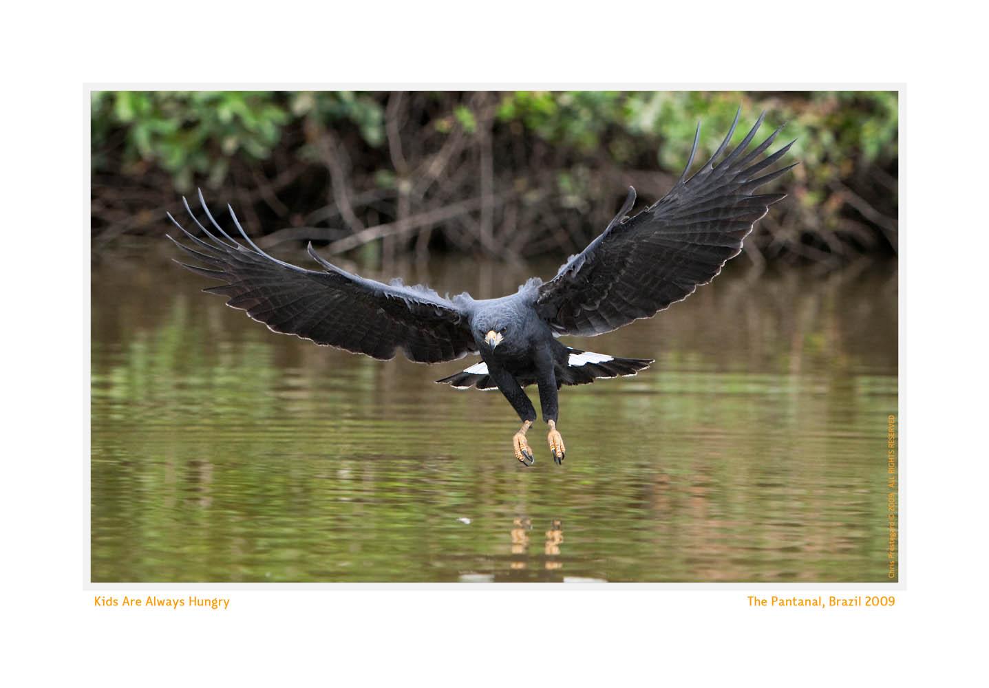 Hawk6831d_Aug20-09