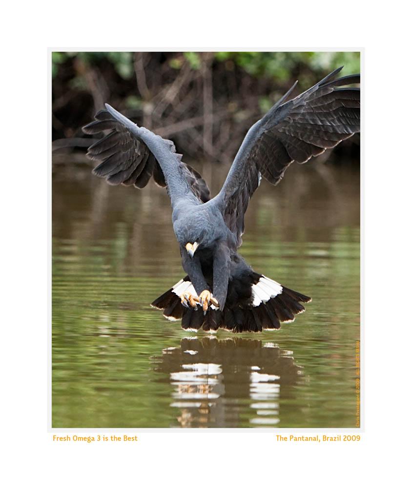 Hawk6843_Aug25-09