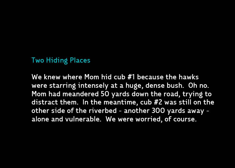Hiding-Oct12-2013