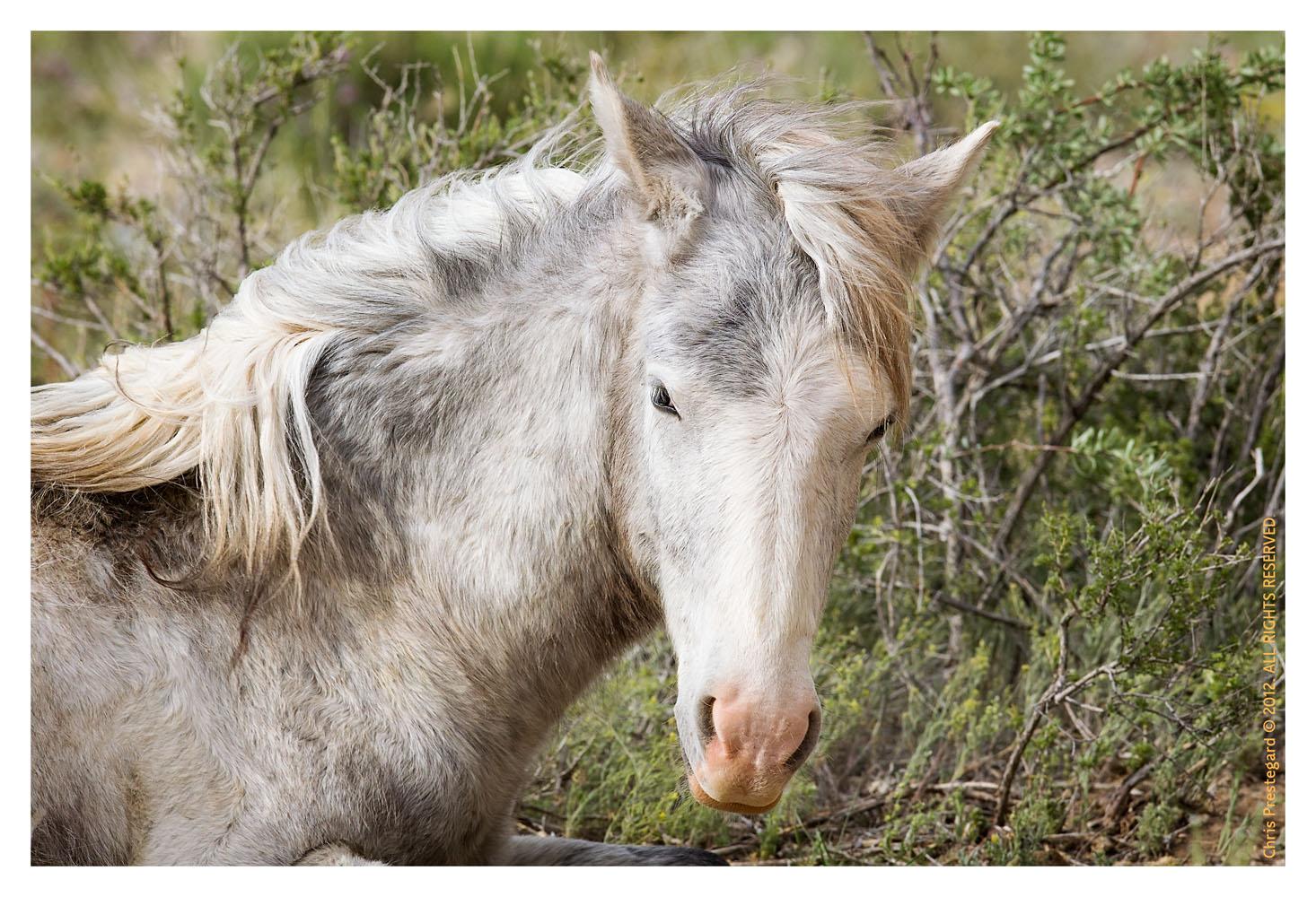 Horse1034_Jan30-2012