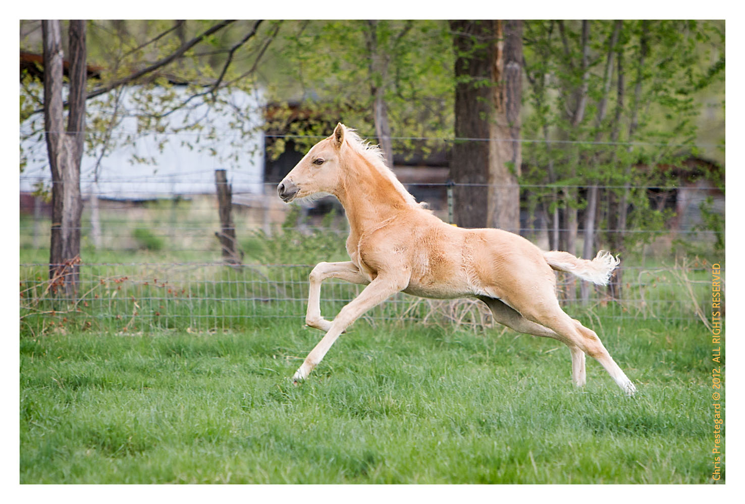 Horse1399-Feb12-2012