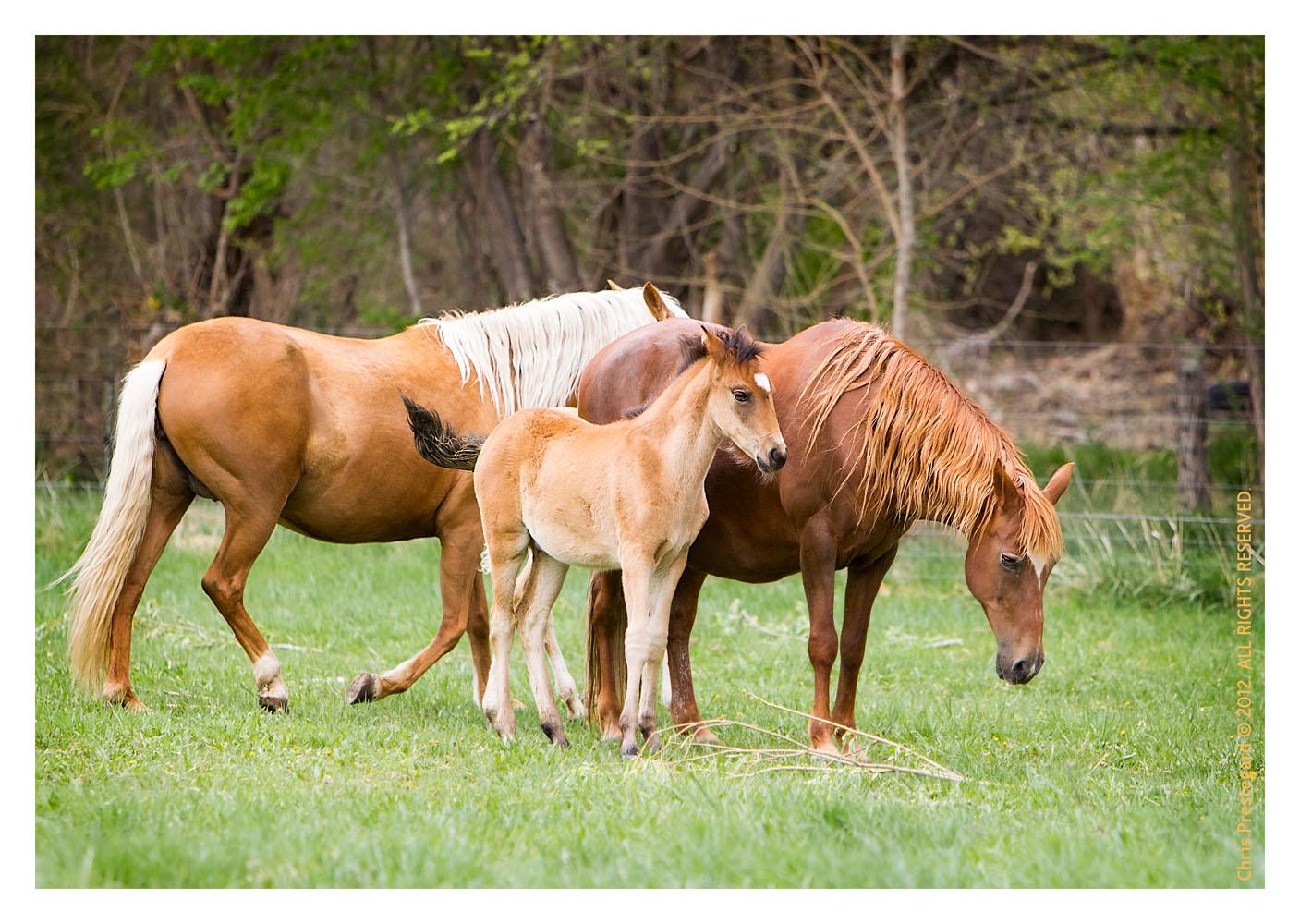 Horse1556_Feb10-2012