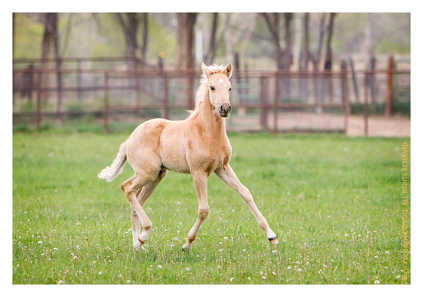 Horse1602-Feb11-2012
