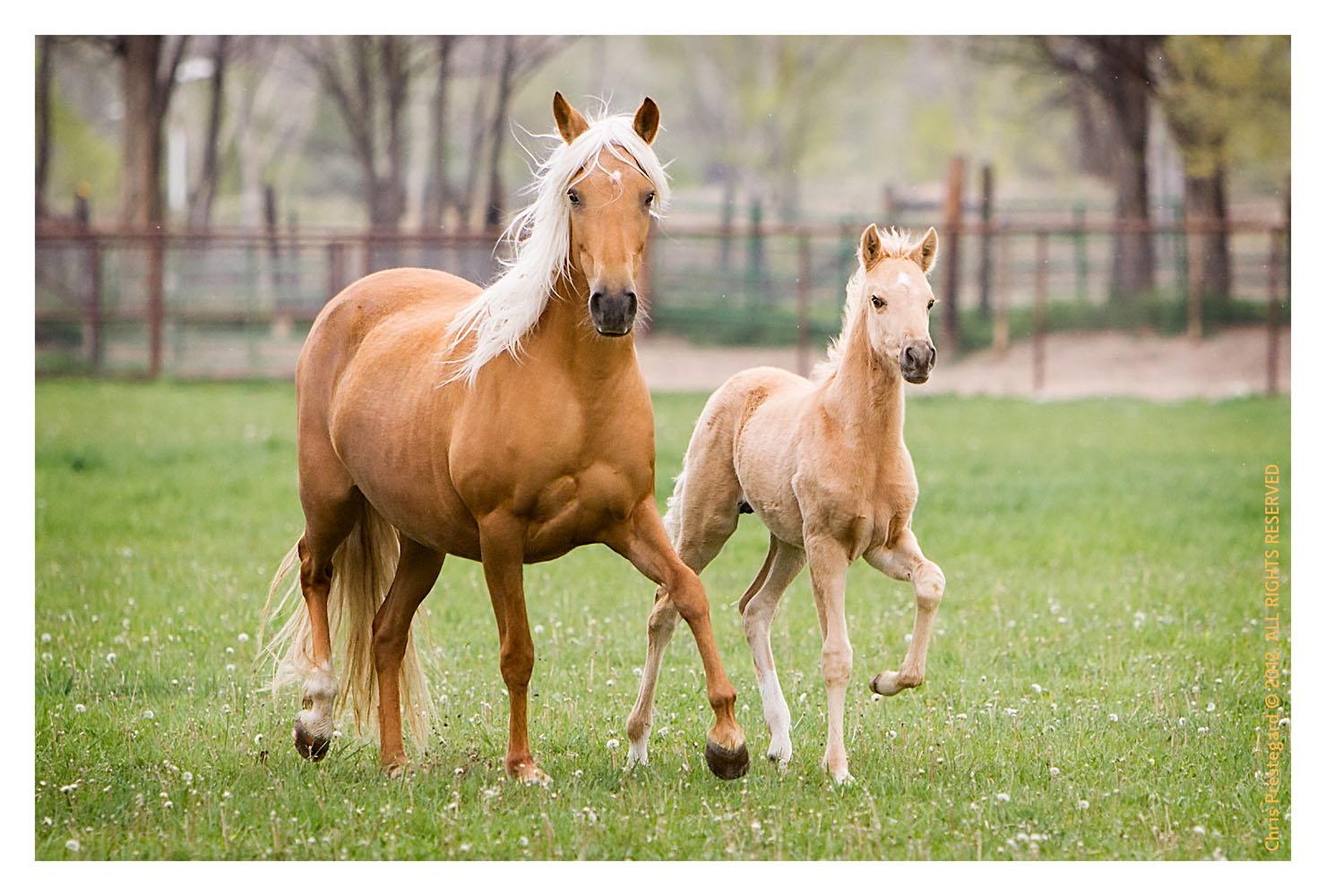 Horse1609-Feb11-2012