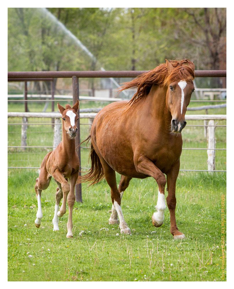 Horse1824-Feb11-2012