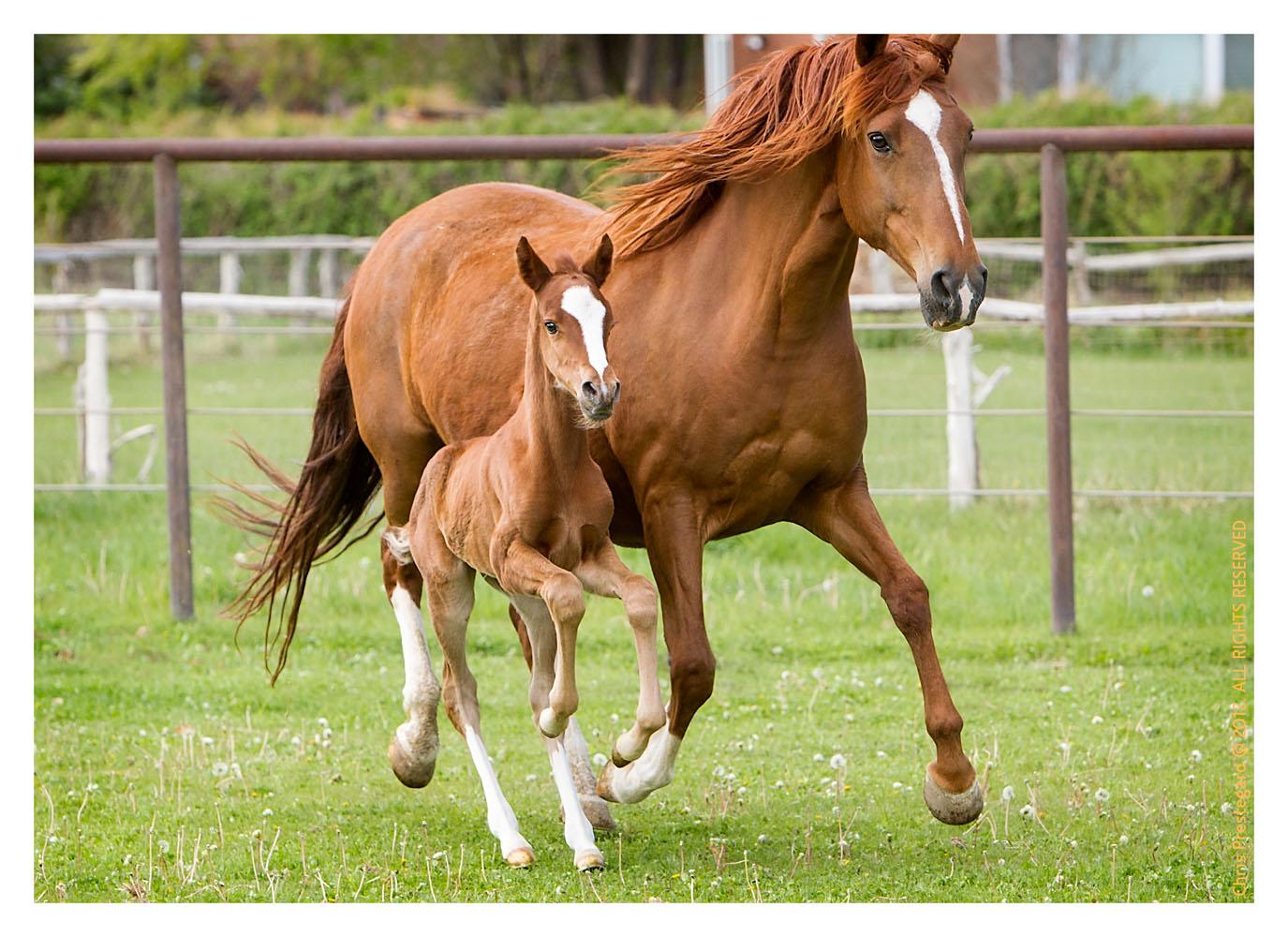 Horse1835_Feb10-2012