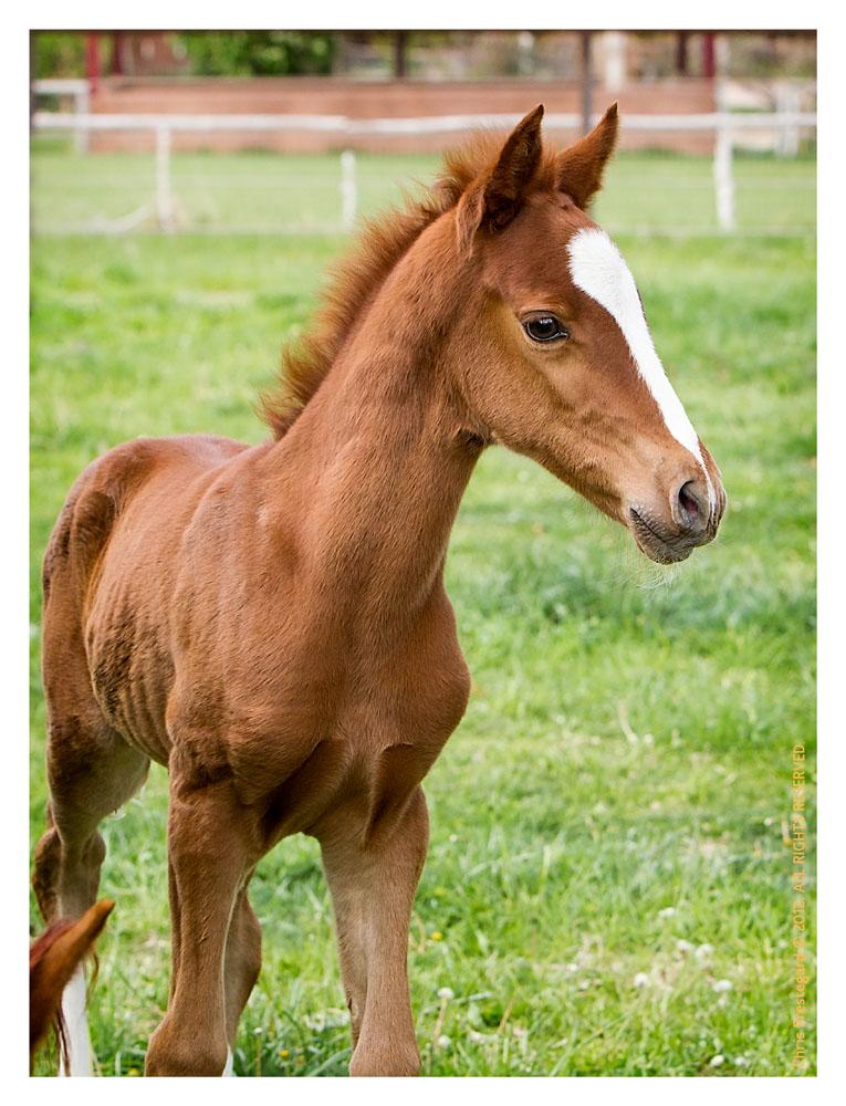 Horse1902-Feb13-2012