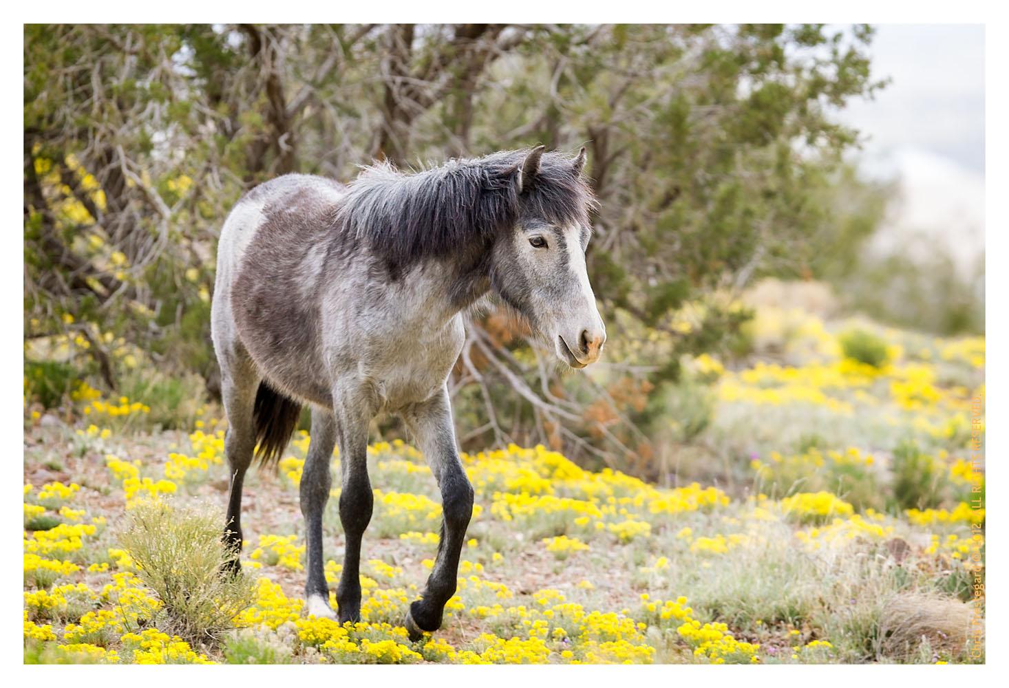 Horse202_Feb1-2012