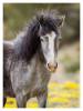 Horse214_Jan30-2012