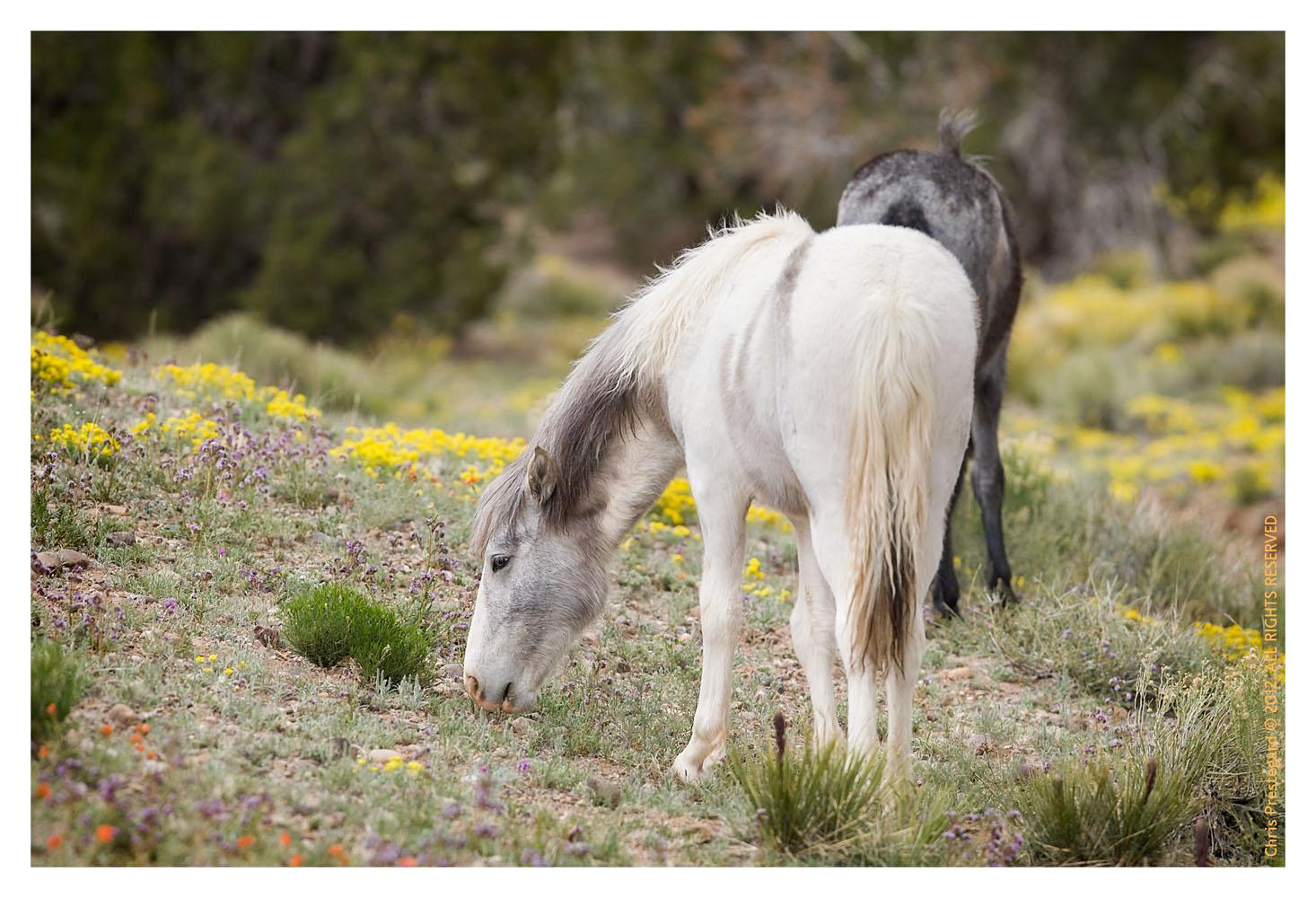 Horse22_Jan30-2012