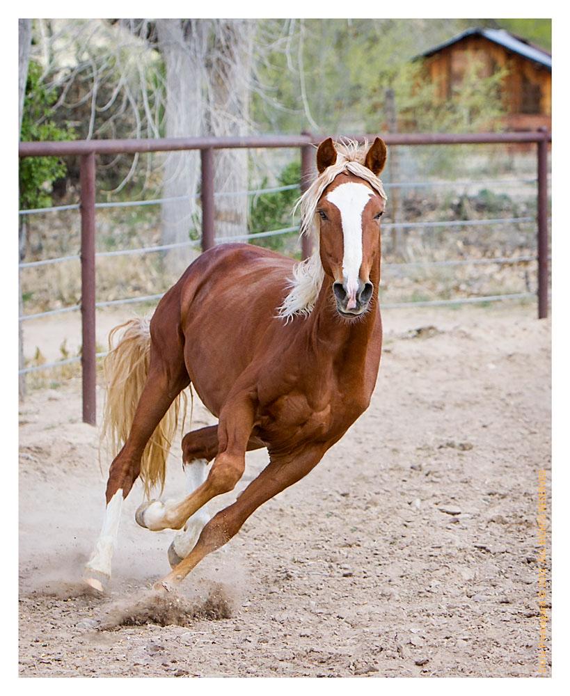 Horse2469_Feb10-2012