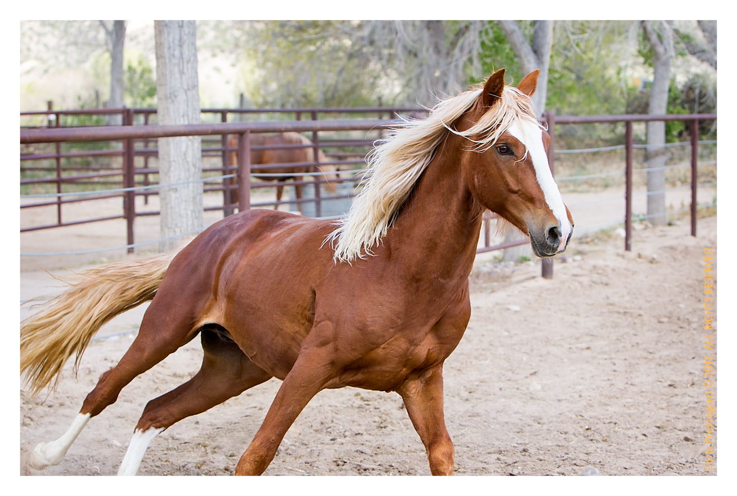 Horse2524-Feb14-2012