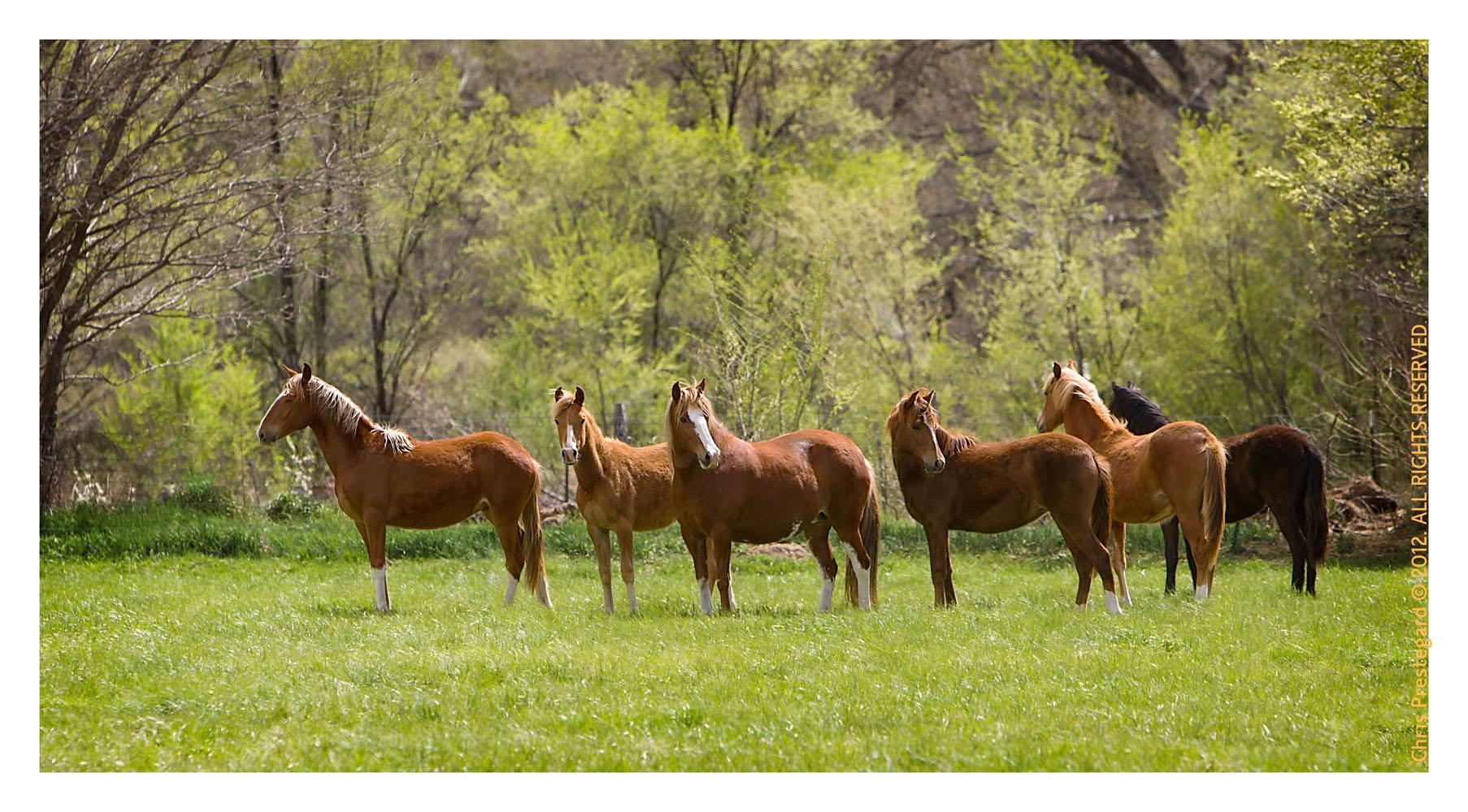 Horse3021-Feb17-2012