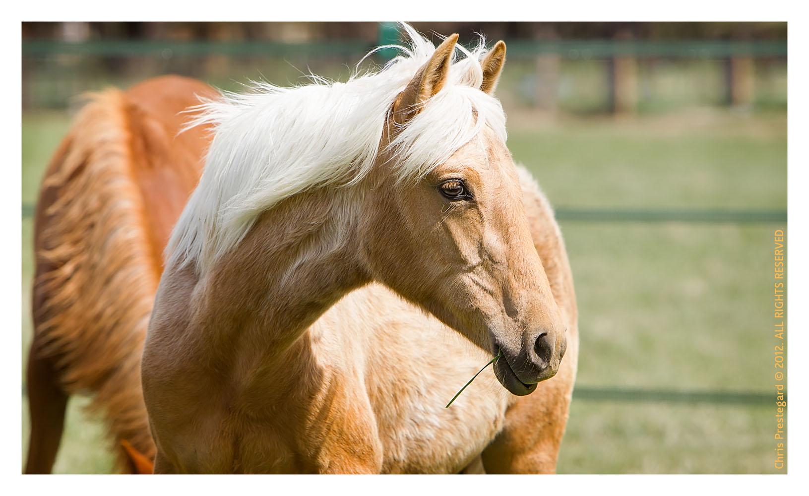 Horse3118-Feb13-2012